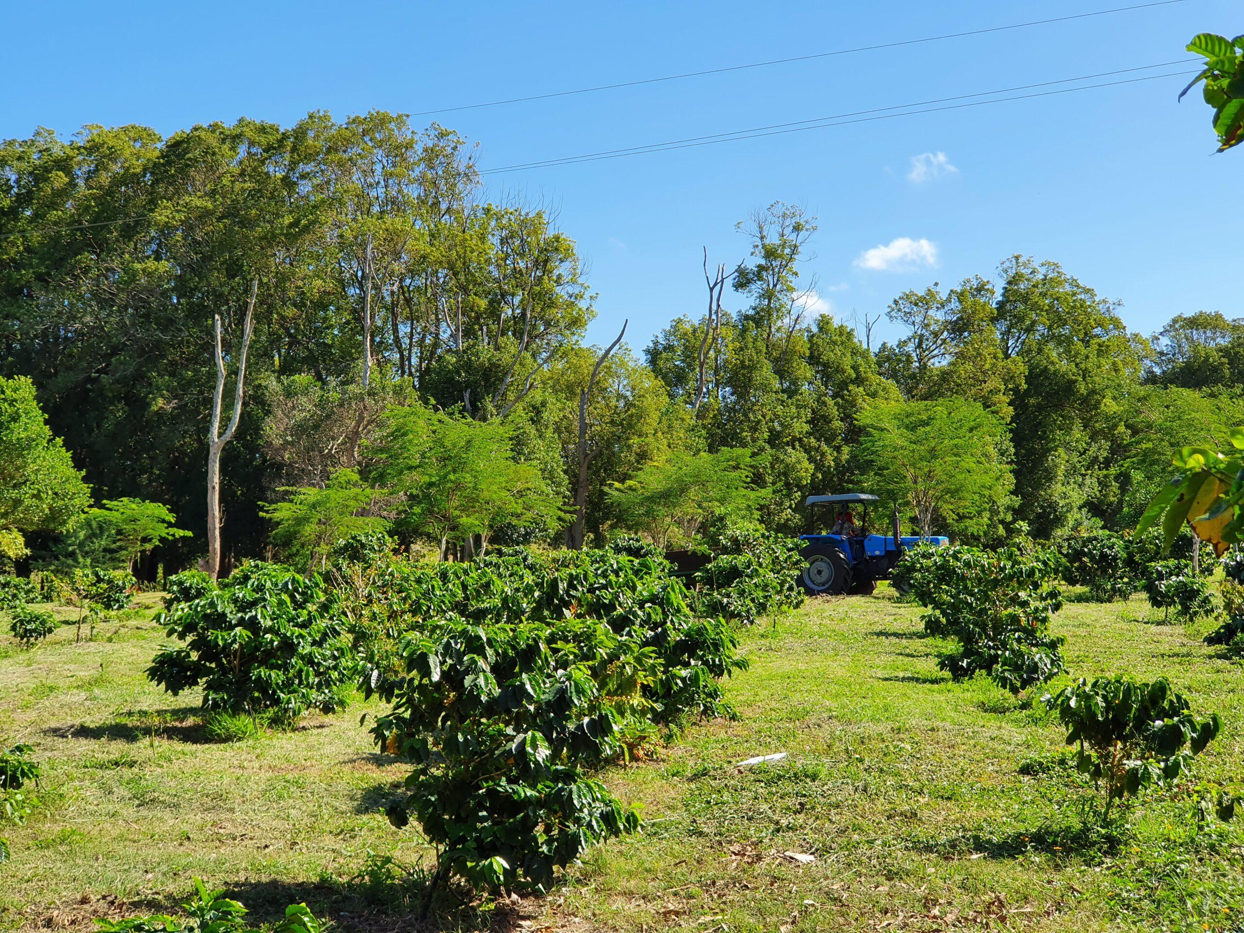 Beaver Creek Coffee Estate